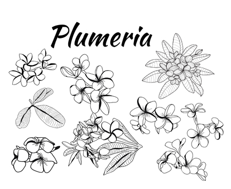 Vector hand drawn Collection of plumeria flower and leaves, frangipani illustration. Can use for pattern, logo, template, banner, posters, invitation and greeting card design. Illusztráció