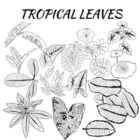 hand drawn Collection of tropical leaves in sketch style. Can use for pattern, template, banner, posters, invitation and greeting card design.