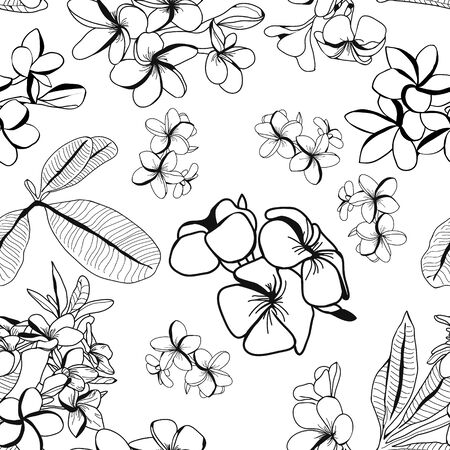 hand drawn pattern of decorative plumeria flower and leaves, frangipani on white background.