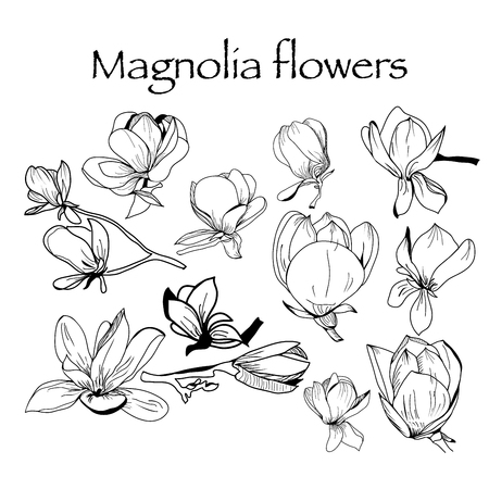 Vector hand drawn Collection of magnolia flower and leaves, sketch illustration. Can use for pattern, logo, template, banner, posters, invitation and greeting card design