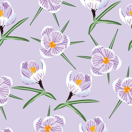 Crocus on lilac background. Illusztráció