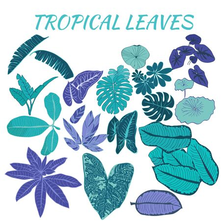 Vector hand drawn collection of different tropical-palm leaves, set of exotic leaves for design decoration.