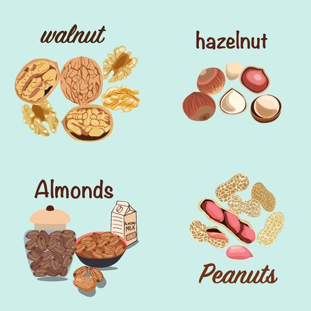 Vector hand drawn colorful set of nuts walnut, Hazelnut, almonds, peanut. Farmer market design. Whole and half nuts seed. Healthy food, organic illustration
