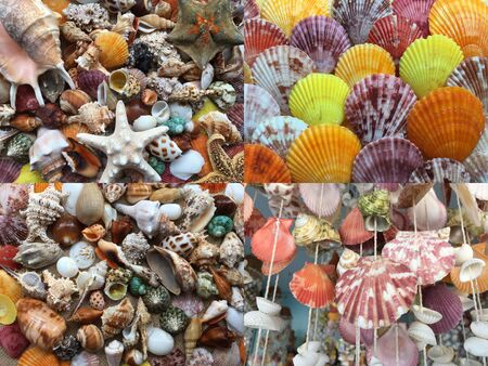 Set of Background of various sea shells. Texture of nature shells top view. Group of close-up exotic seashells.