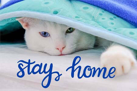 Cat lying under a blanket and stretched out his paw. Stay home lettering. Quarantine precaution to stay safe from Coronavirus  concept.