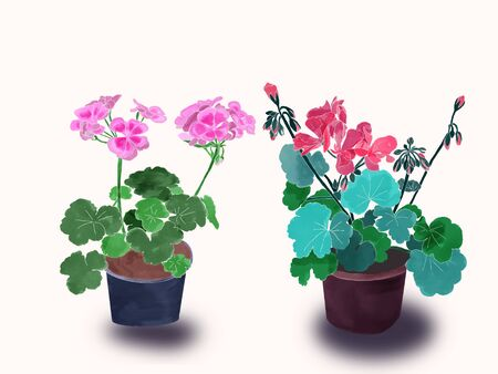 Hand drawn potted flowers Set of isolated two geraniums, watercolor. Beautiful Geranium, watercolor illustration. Stock fotó