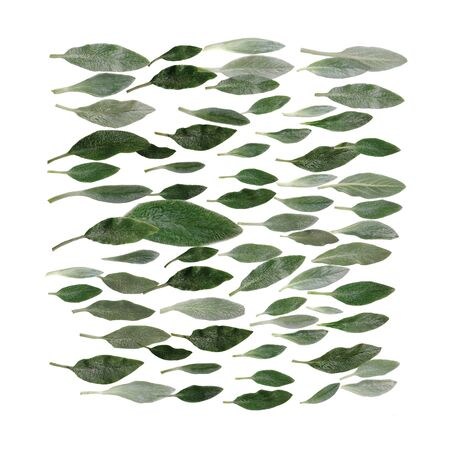 Green leaves isolated on white background. Flat lay square shape texture.
