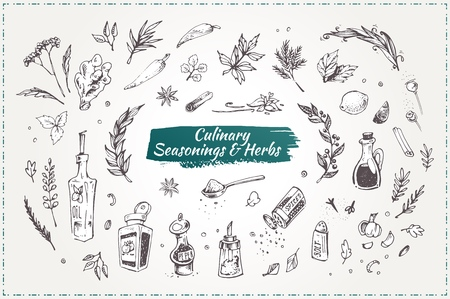 Culinary seasonings and herbs. Set of sketch hand drawn vector icons isolated on white. Doodle style elements for design restaurant menus and decorating cookbooks and recipes