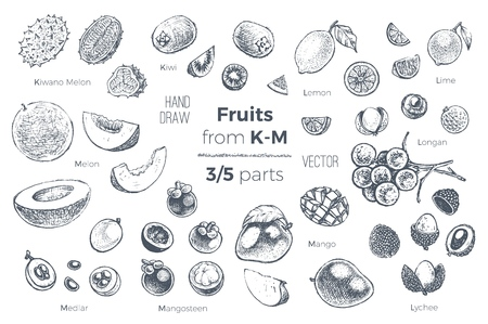 Fruits set. Engraved style hand drawn vector icons. Sketches of tropical fruits from K to M for design of juice packages and smoothie recipes. 3 of 5 parts