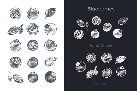 Hand drawn blueberry icons set isolated on white and black chalk background. Sketch of fruits for packaging and menu design. Vintage vector illustration.
