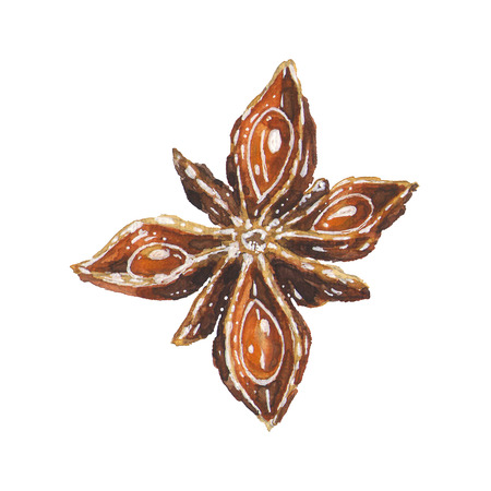 Anise star illustration. Hand drawn watercolor brown aniseed spice, art isolated on white background. Christmas decoration element for kitchen or menu Banco de Imagens