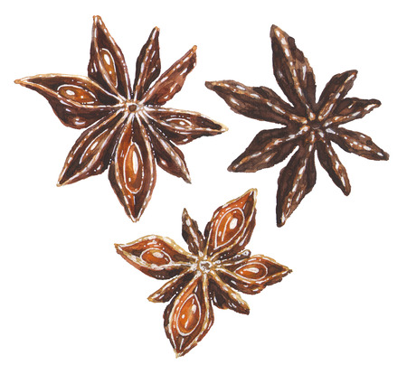 Anise star illustrations set. Hand drawn watercolor art of brown aniseed spice isolated on white background. Christmas decoration elements for kitchen. Banco de Imagens