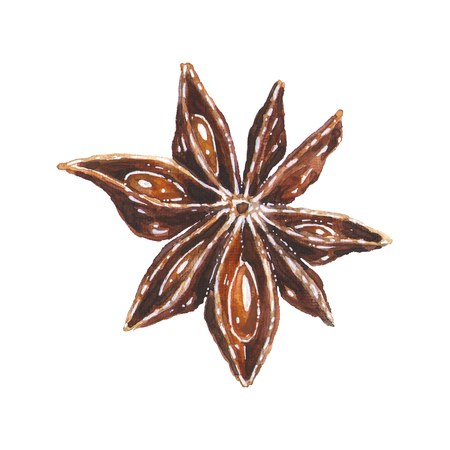 Anise star illustration. Hand drawn watercolor brown aniseed spice, art isolated on white background. Christmas decoration element for kitchen or menu Banque d'images - 116735953