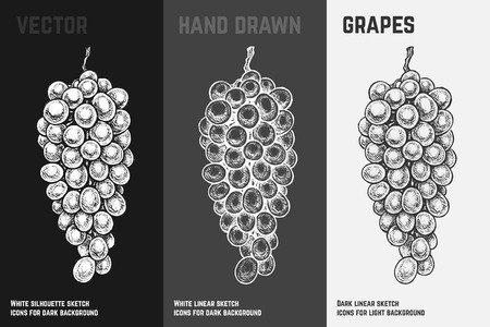 Hand drawn bunch of grapes set isolated on white, gray and black chalk background. Engraved styled sketch of fruits for wine packaging and menu design. Ilustracja