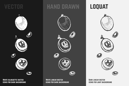 Hand drawn loquat icons set isolated on white, gray and black chalk background. Sketch of exotic fruits for packaging and menu design.