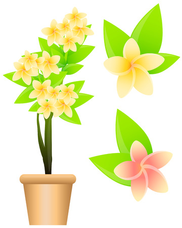 Tropical flowers plumeria isolated on white background. Vector illustration