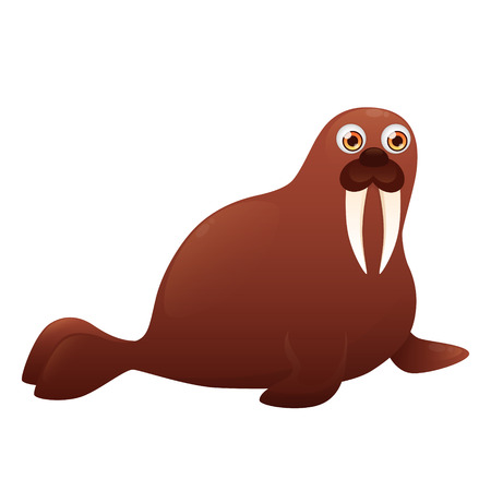 walrus: Walrus isolated on white background.
