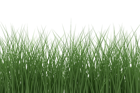 Green Grass isolated on white background. 3d rendering