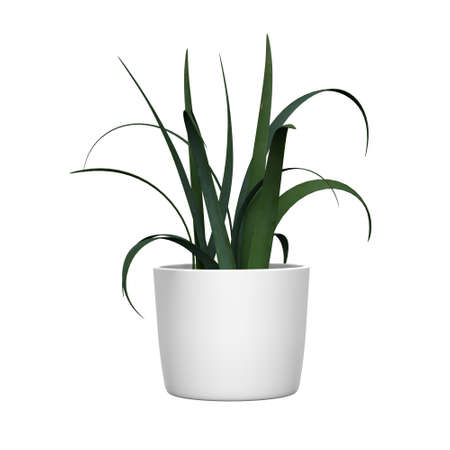 Green plant in a pot on a white background. 3d rendering