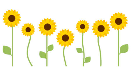 Sunflower with leaves isolated on white background. Flat design for poster or t-shirt. Vector illustration Vettoriali