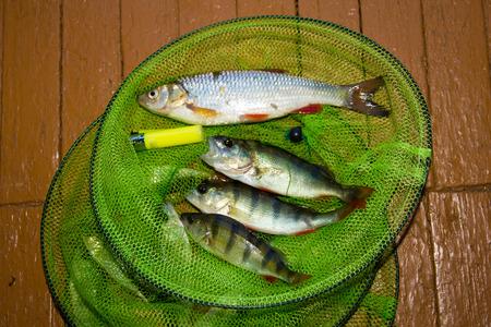 atrapar: catch