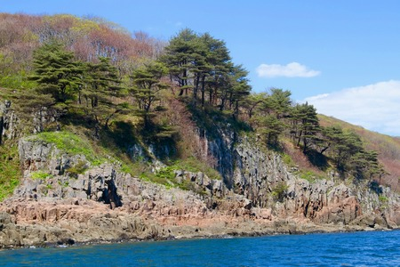 biosphere: Pine trees growing along seashore, Far East Marine Biosphere Reserve, Vladivostok, Russia