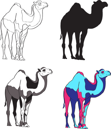 camels: illustration depicting camels, made contour, silhouette, black and white spots and bright colors.