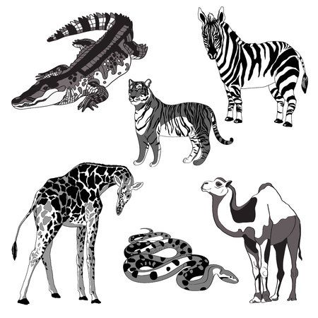 illustration giraffe, zebra, crocodile, camel, snake and tiger
