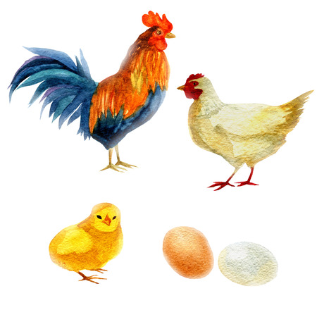Watercolor illustration, rooster, chicken, and chicken. New Year symbol image element to holiday cards, posters, invitations Stock Photo