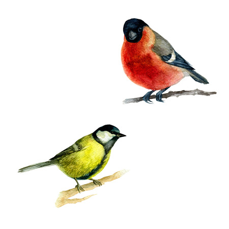 Watercolor illustration, set, image of birds of the bullfinch and tits sitting on a branch.