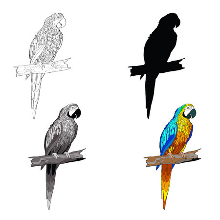 Vector illustration. Sitting on a branch parrot with turquoise wings. Black and white line, silhouette, black and white, gray and color image. Illustration
