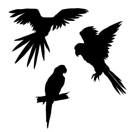 macaw: Vector illustration. Set of parrots, flying parrots. Parrot sitting on a branch. Black silhouette.