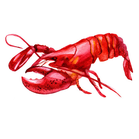 Watercolor illustration of lobster on white background. Fresh organic seafood. Hand drawn illustration
