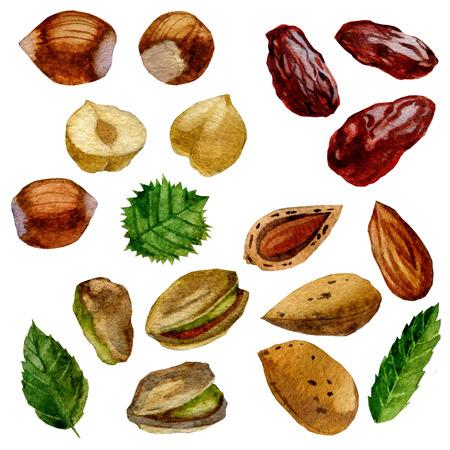 수채화 그림입니다. 견과류와 날짜 집합입니다. 피스타치오, 아몬드, 헤이즐넛 및 날짜