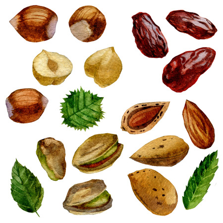 Watercolor illustration. Set of nuts and dates. Pistachios, almonds, hazelnuts and dates