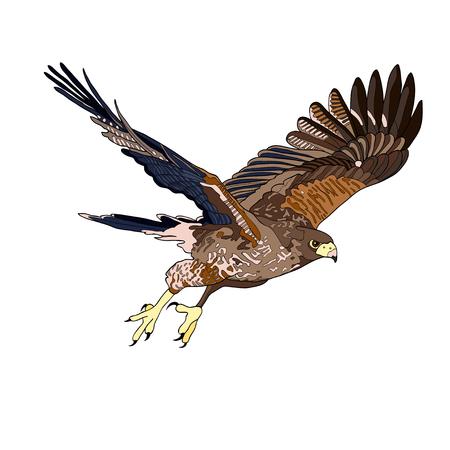 Illustrazione vettoriale, un'immagine di un falco volante. Linea nera, macchie nere e bianche e grigie, sagoma nera, immagine a colori
