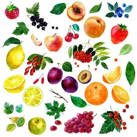 sorb: Watercolor illustration, set of watercolor fruit and berries, parts and leaves, peach, plum, lemon, orange, apple, grapes, strawberries, raspberries, cherries currants blackberries blueberries gooseberries barberries and rowan