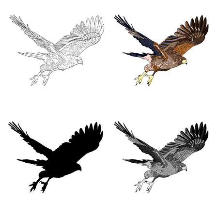 Vector illustration of an image of a flying hawk