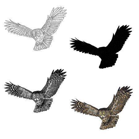 Vector illustration. An image of a flying owl. Black and white line, silhouette, black and white, gray and color image