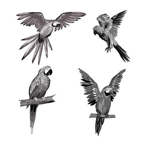 Vector illustration. Seth from parrots in different angles. Black, white, gray Illustration