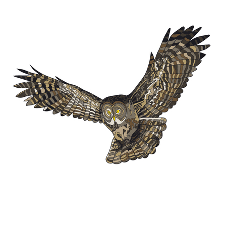 Vector illustration, an image of a flying owl. Color illustration