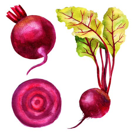 Watercolor illustration of root beet, leaves of chard, slice of beetroot, set of vegetables