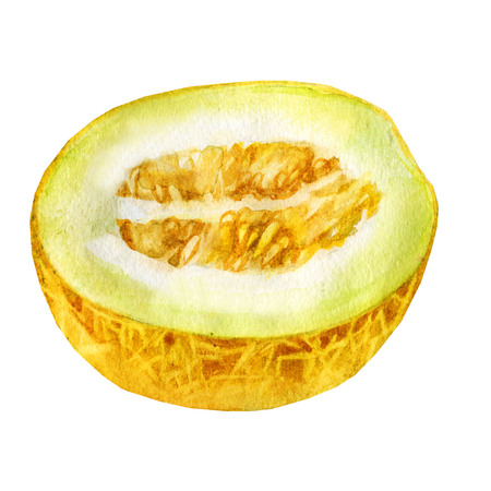 Melon watercolor illustration. Melon on white background