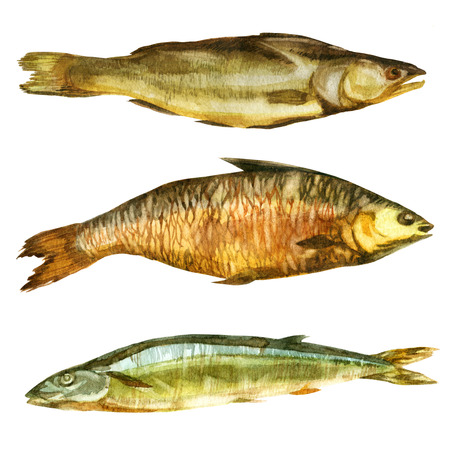 Watercolor illustration. Smoked dried fish of different types