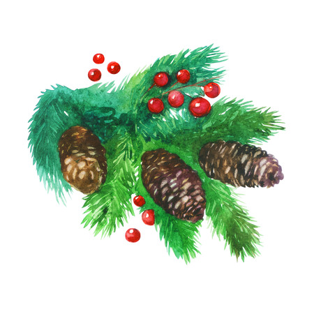 Watercolor illustration. Christmas tree, spruce branch with cones and red Holly berries.