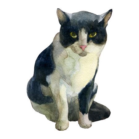 Watercolor illustration. Sitting cat at watercolor Imagens