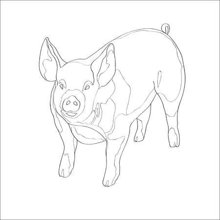 Vector illustration. Pig Line ontour image