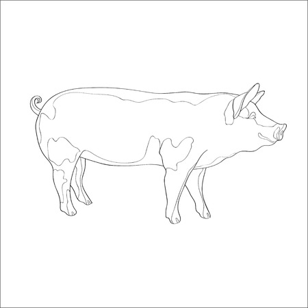 Vector illustration. Pig side view Line