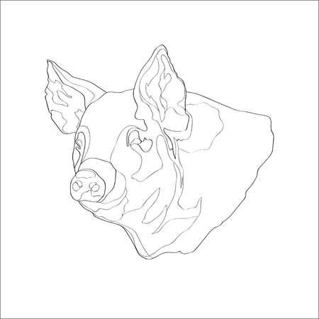 Vector illustration. Pig pig head Line
