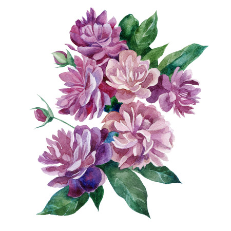 Watercolor illustration. Peonies. A bouquet of peonies